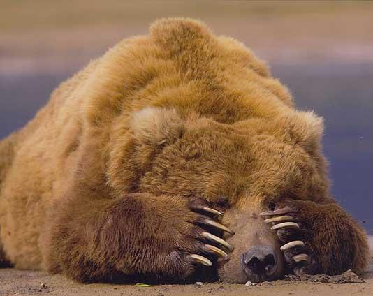 fail_bear