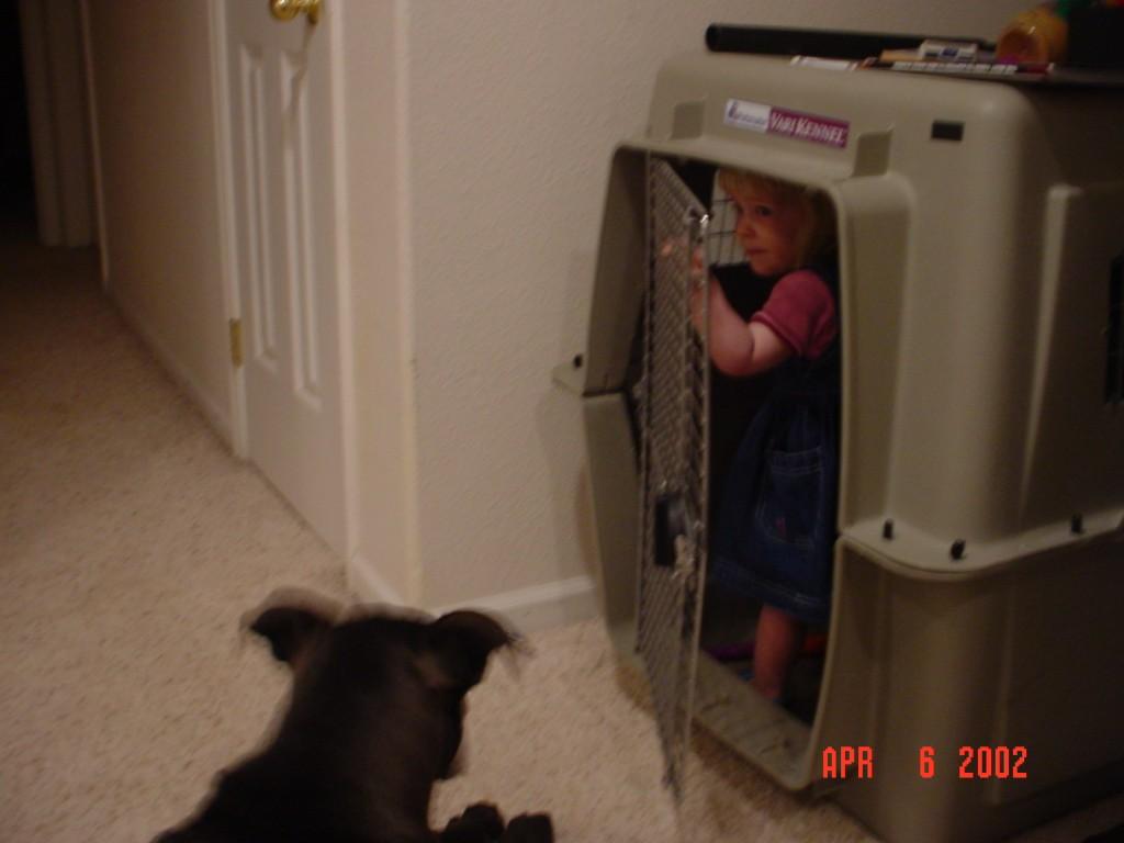 Crazy Dog Kennel