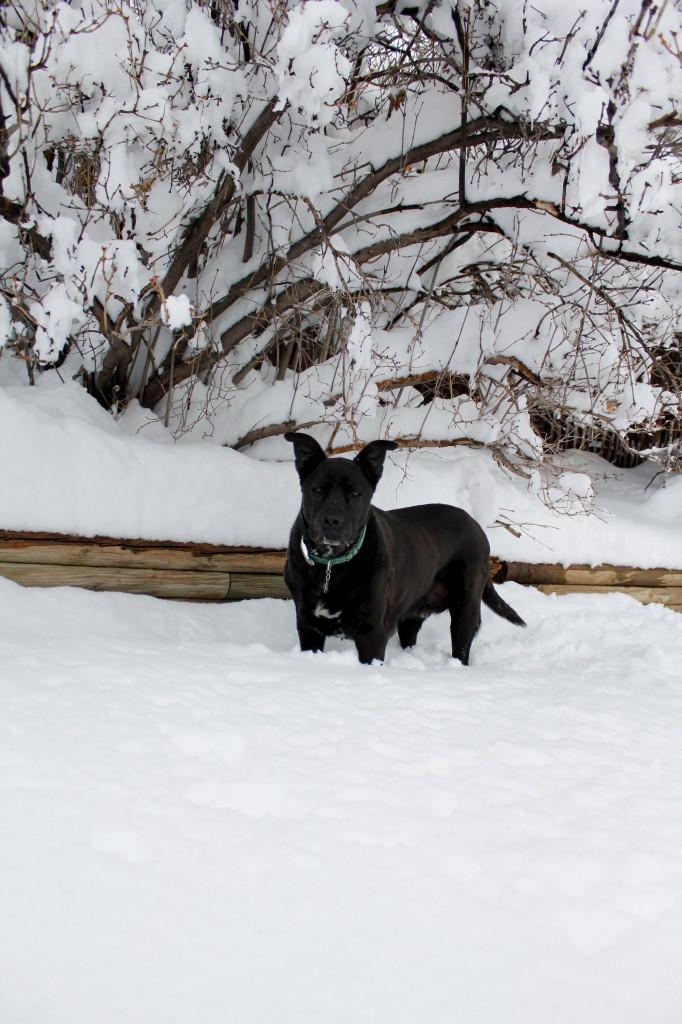 2012-02-04 Jake snow